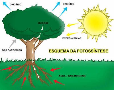 Agua e sais minerais, juntamente com CO2 e energia do Sol  resultam em matéria orgânica e oxigénio