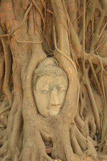 Wat Mahathat buddha head