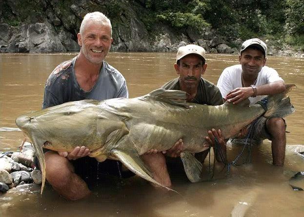 resep umpan, Umpan Ikan Dalum, Umpan Jitu Ikan Dalum, Ikan Dalum, rahasia umpan, Macam-macam Teknik Mancing, Teknik Mancing,
