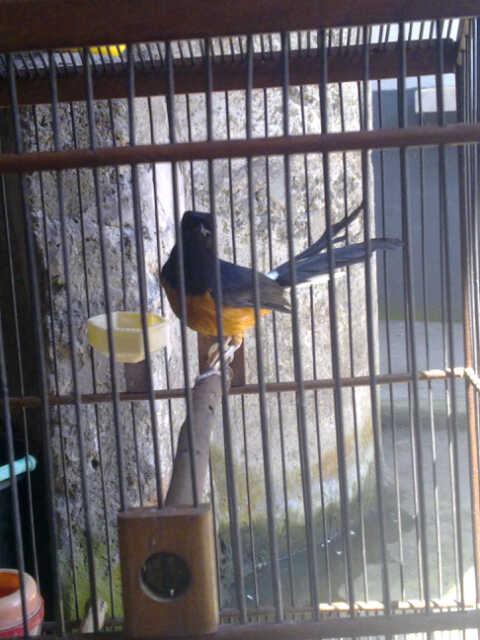 Image Result For Cerita Burung Jawara