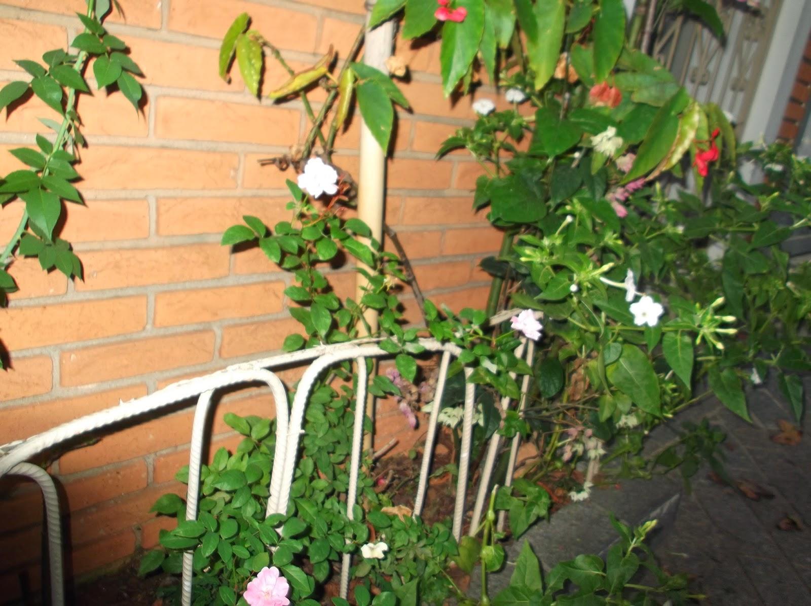 cerca de jardim ferro : cerca de jardim ferro:cerquinhas de jardim pode ser alcançado com restos de arame, ferro de
