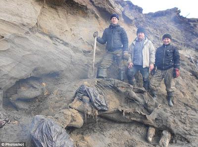 Mamut congelado encontrado Rusia