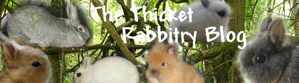 The Thicket Rabbitry Blog