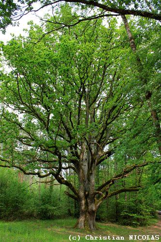 données archéologiques forêt de chinon