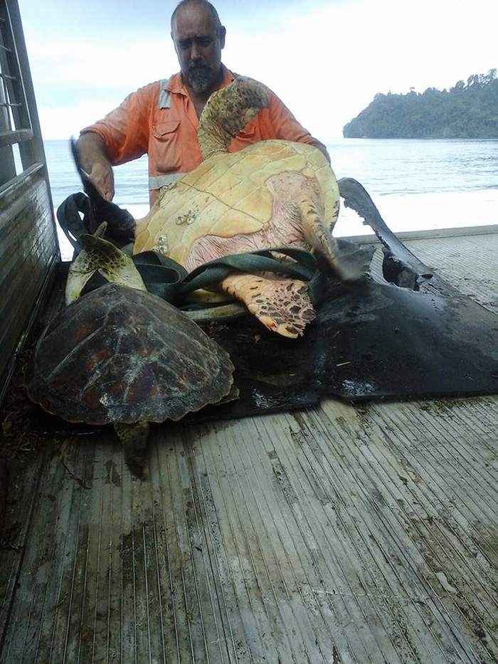 "Man Buys Turtles From Food Market And Releases Them Back To The Sea - ""Found these at the local market"""