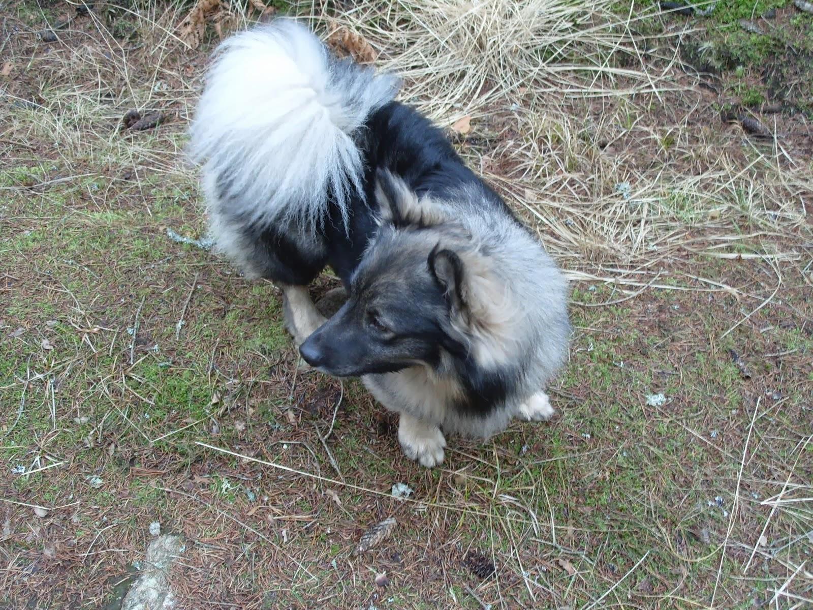 Plymhunden