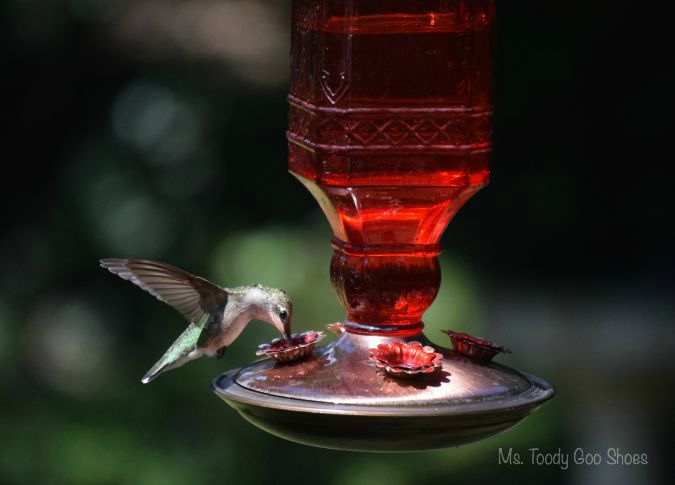 Itu0027s Easy To Attract Hummingbirds If You Follow These Six Tips | Ms. Toody  Goo