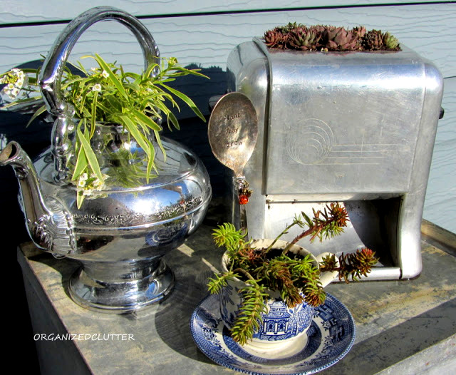 Make a toaster into a cool succulent planter, by Organized Clutter, featured on I Love That Junk