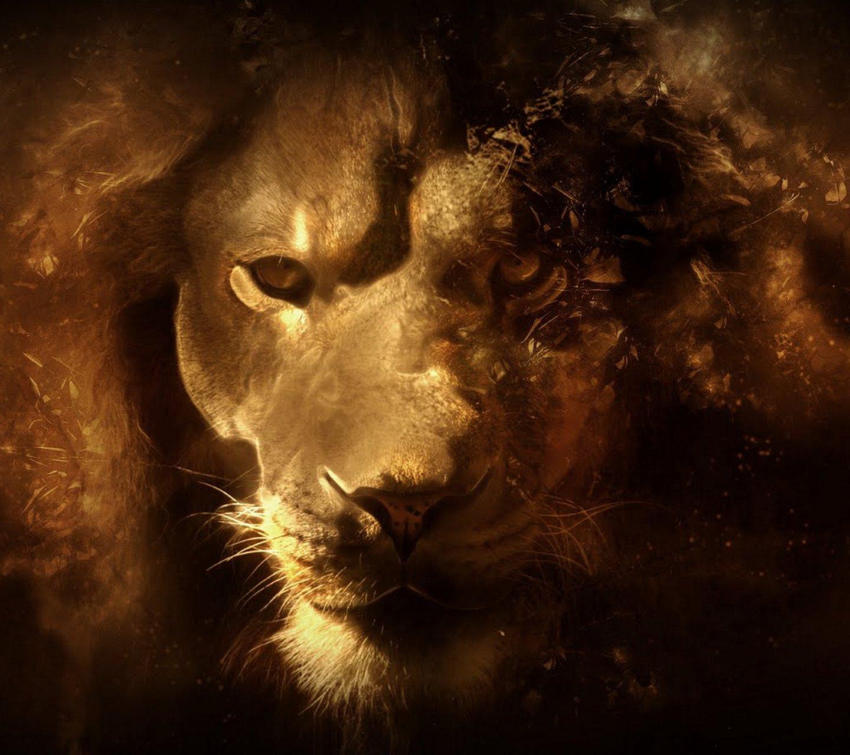 http://2.bp.blogspot.com/-rwIZ2VCUUJE/UaK1wIK62fI/AAAAAAAARw0/WHje5nJxUsU/s1600/lion_hd_wallpaper.jpg
