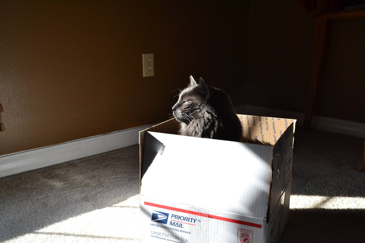 Залез в коробку для отправки почты - прикольные коты 22-11-12