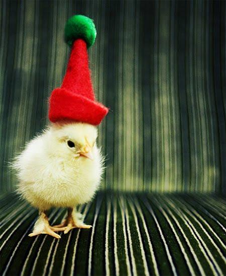 http://2.bp.blogspot.com/-rwLLDdyrmO8/TtzzOZUu2qI/AAAAAAAACc4/xV48I1BlcRU/s1600/ecards-funny_christmas_pets_2.jpg