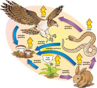 Concepto de comunidad biologica en ecologia