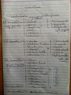 Classifications of Cephalosporins and Sulphonylureas
