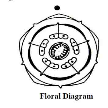 Rice Floral Diagram besides Industrial Ceiling Fan Wiring Diagram moreover Rs232 A Rj11 together with  on e30 obc wiring diagram