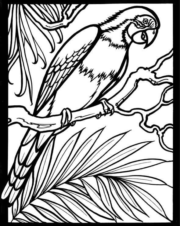 scarlet macaw coloring page mackaw free colouring pages