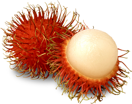 Rambutan - fruta anti cancer