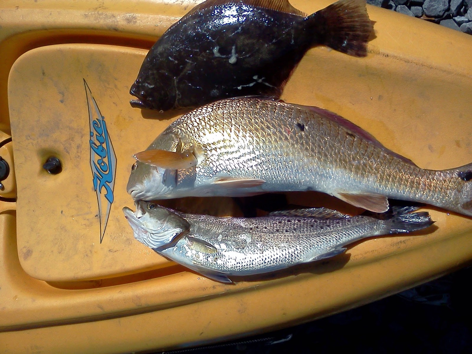 redfish speckled trout flounder
