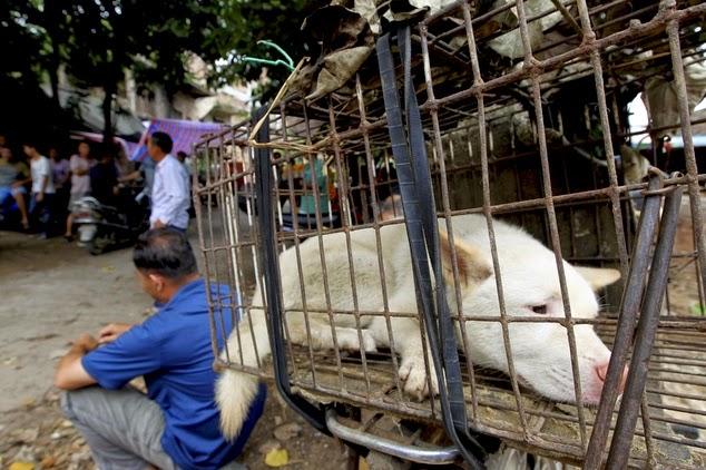 Perros sacrificados para comida en China