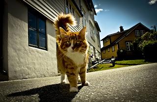Wallpaper pisica 3
