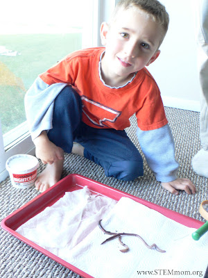 Boy studying whether worms prefer wet or dry paper towels