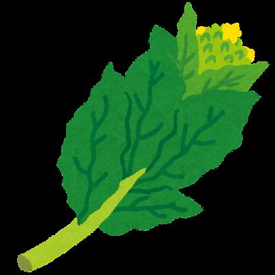 菜の花のイラスト(野菜)