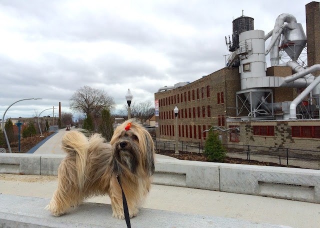 606 Bloomingdale Trail Chicago Rocco Havanese