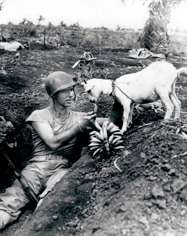 40 Must-See Photos Of The Past - Soldier shares a banana with a goat during the battle of Saipan, ca. 1944