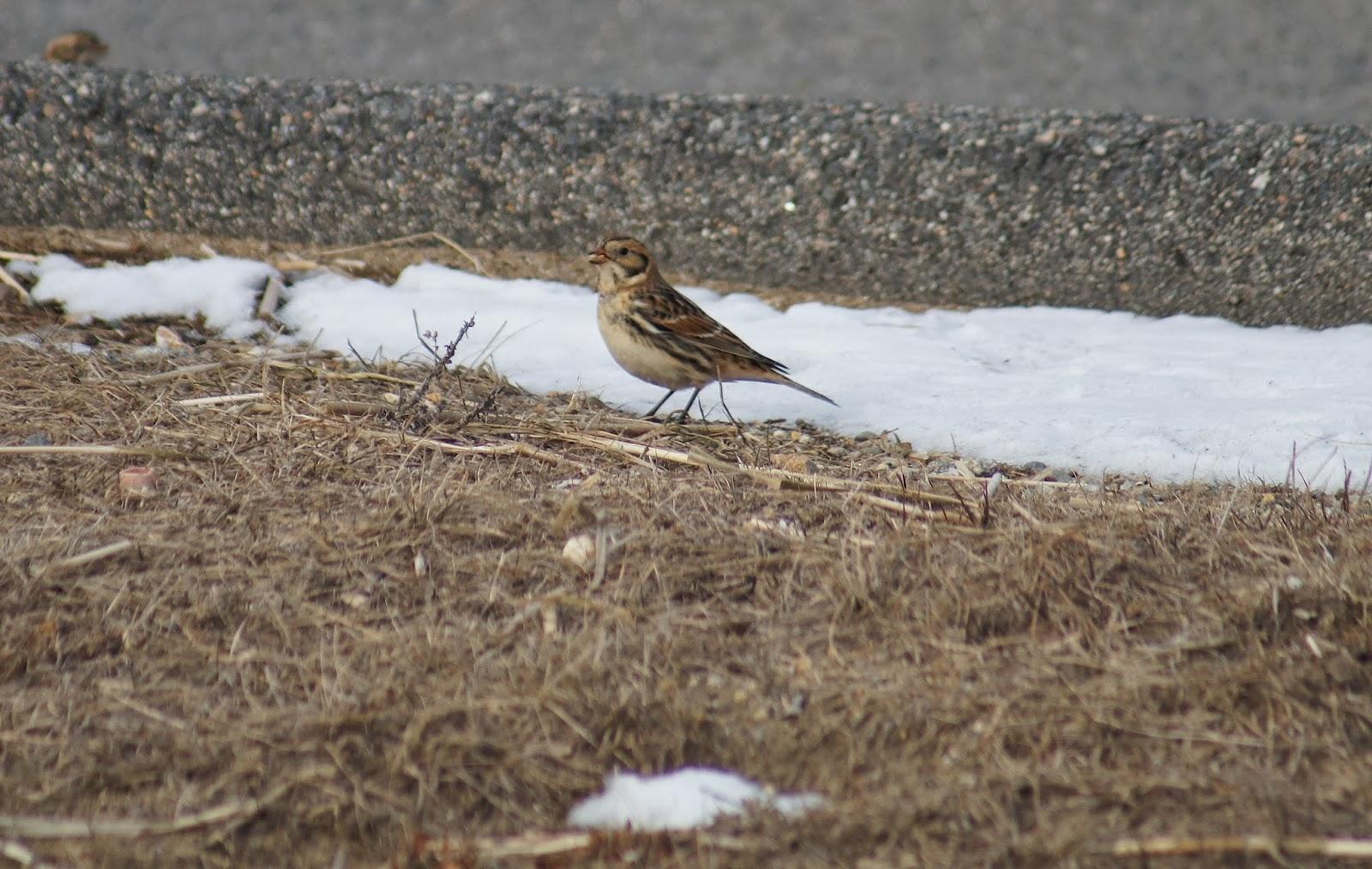 Salisbury Beach State Reservation Birding