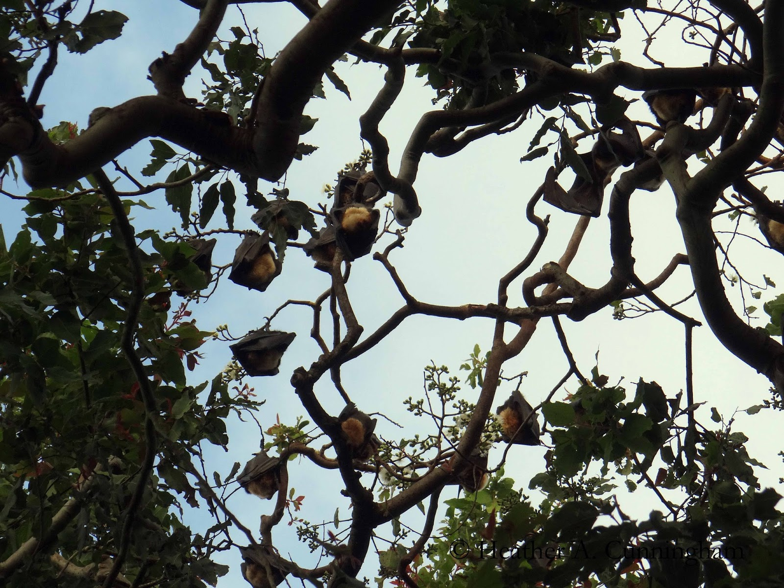 how to get rid of fruit bats in trees
