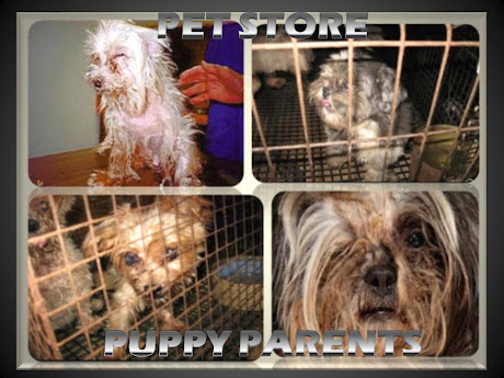 IT IS COST EFFECTIVE FOR A DOG TO SUFFER TO DEATH,  RATHER THAN CUT PROFIT WITH VET CARE. USDA DOGS