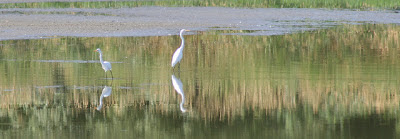 Egret by born 1945, Creative Commons License