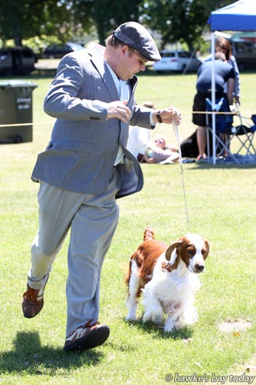 Shaun Ireland, with Brick, a Welsh Springer Spaniel - East Coast Ladies Kennel Association, dog show at Farndon Park. Clive. photograph