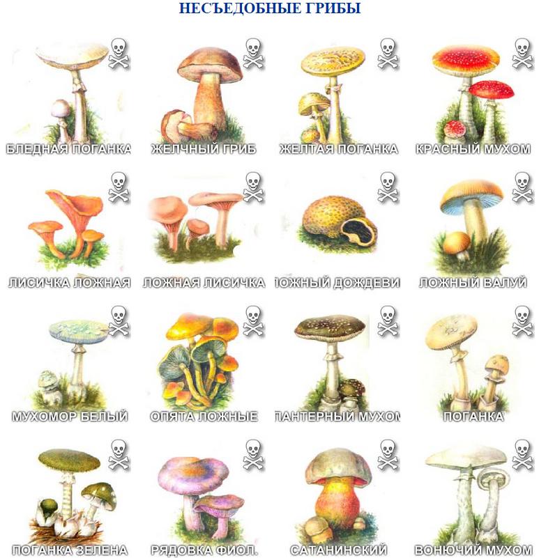 фото несъедобные северные грибы