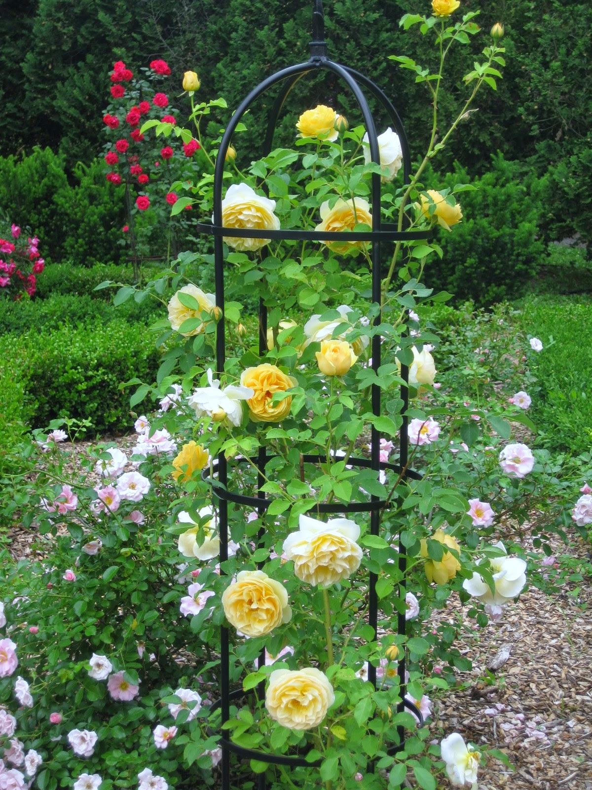 kumaar holidays rose garden munnar. Black Bedroom Furniture Sets. Home Design Ideas