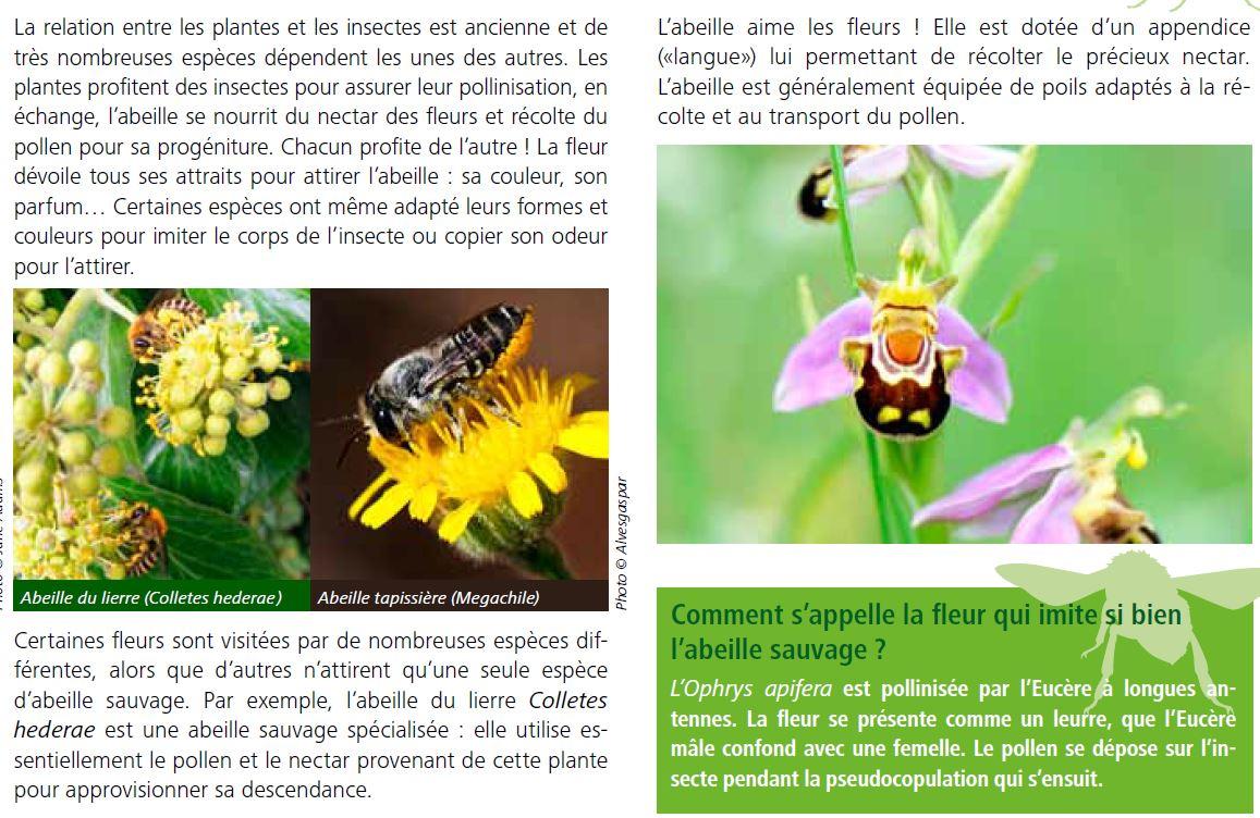 breuillet nature comment attirer les abeilles dans son jardin. Black Bedroom Furniture Sets. Home Design Ideas