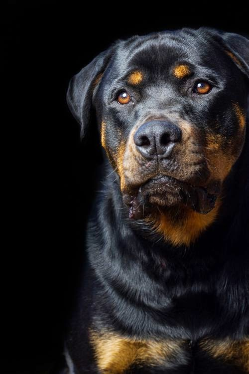 Top 5 best Family Guard Dog Breeds