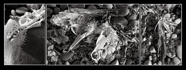 Death; Bones; Animals; Heron; Hirtle's Beach