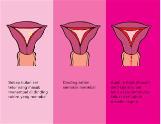 cara mengobati penebalan dinding rahim secara herbal