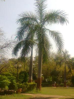 bottlepalm prahladnagar amc garden