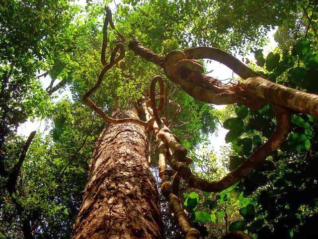 thực vật ở vườn quốc gia phú quốc