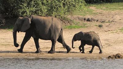 Słonie dwa