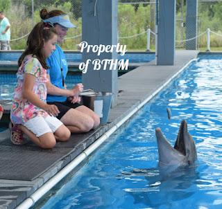 feeding dolphin