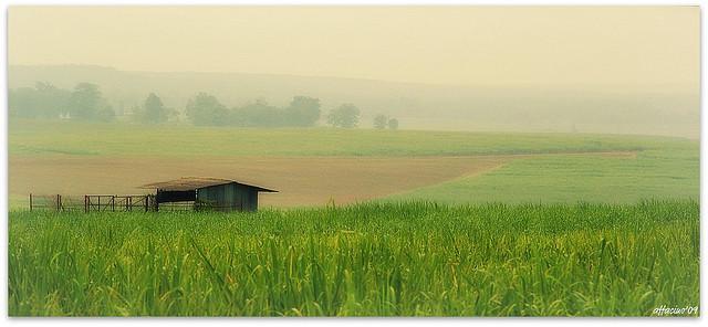 Ladang Tebu Perlis