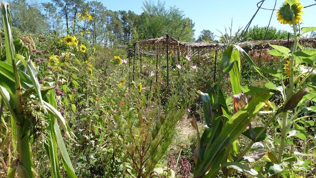 Pierre rabhi une approche critique de ses m thodes le blog de ottolilienthal - Le jardin sauvage maintenay montpellier ...