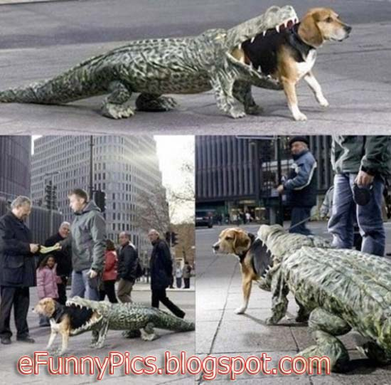 Dog to Crocodile