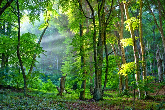 """Вечер в лесу"" Крым, пейзаж, холст 56x85 см Константин Потапов 2013г."
