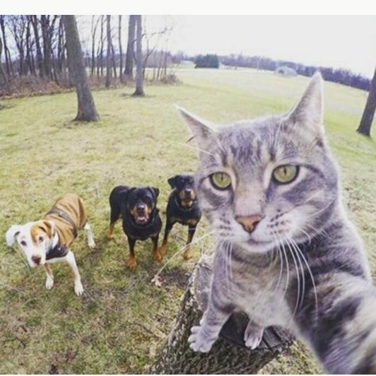 Gato selfie com cachorros
