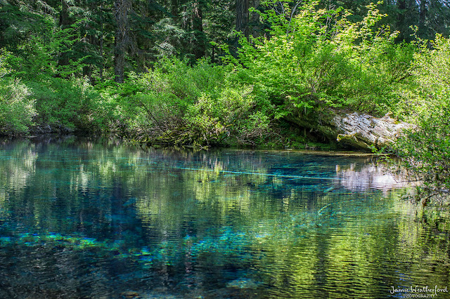 As i see it clear lake and great springs for Clear lake oregon fishing