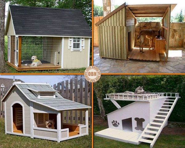 artistic land cool dog houses