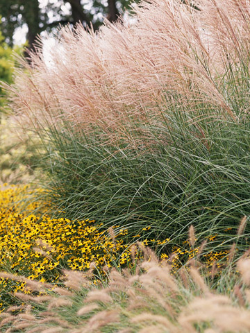 7 awesome ornamental grasses for every cottage garden for Landscaping with zebra grass